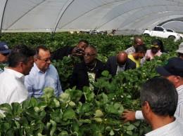 Autoridades agrícolas de RD y de Haití inspeccionan cultivos.